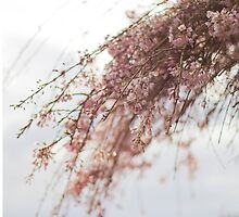 Sprays Of Spring by ghd-photography