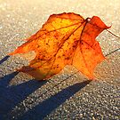 Leaf of fall by Päivi  Valkonen