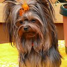 Yorkie Princess by Gail Bridger