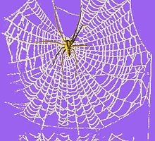 Spider in Web by Sharon Stevens