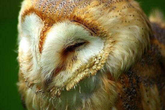 Barn Owl -3 by Trevor Kersley