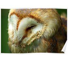 Barn Owl -3 Poster