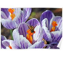 To Bee Happy Poster