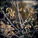 If Autumn Met Spring by James McKenzie