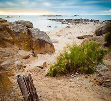 Ladies Beach by Steven Johnson