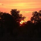 Skeeter Hawk Sunset by Southerngurl
