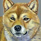 &quot;Suki&quot; - Shiba Inu by thatdogshop