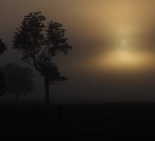 Foggy Sunrise by Trevor Farrell