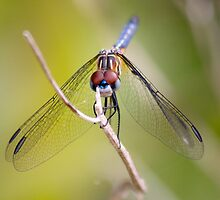 Everglades dragon fly by digitaldawn