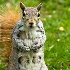 Girl Squirrel by Louis Galli