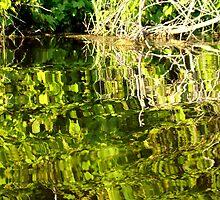 Crazy reflection by Gotcha  Photography