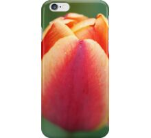 Tulip with dew drops 1 iPhone Case/Skin