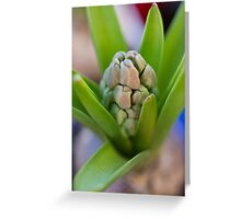hyacinth in the garden Greeting Card