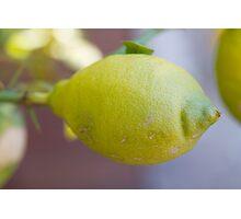 lemon on tree Photographic Print