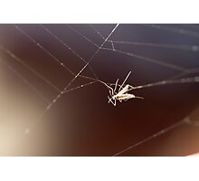 fly caught in the web Photographic Print
