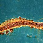 Sea Serpent by Kathie Nichols