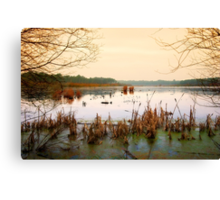 Forest lake Canvas Print