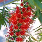 Bottlebrush  bush blooming... by Southerngurl