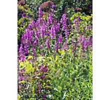 Michigan Wild Flower Impression Photographic Print
