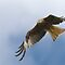 Red Kite 1 by George Ledger