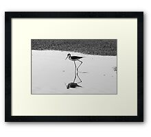 Graceful Feeder Framed Print