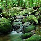 Mossman Gorge by Stephen Colquitt