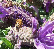colour me purple by Coloursofnature