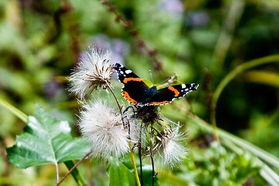 Butterfly by dozzie