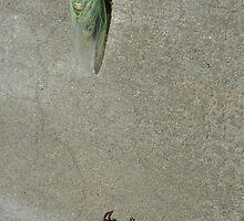 Cicada Reborn by Cathy Jones