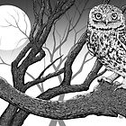 Night Owl by Robert Marzullo by Robert Marzullo