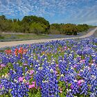 Texas Wildflowers Images - Bluebonnets 2 by RobGreebonPhoto