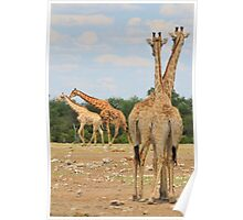 Giraffe - Jealousy and Funny Love Poster
