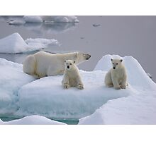Polar Bear Family II Photographic Print