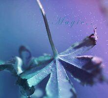 Magic by Stephanie Hillson