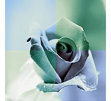 Winter Rose Photographic Print