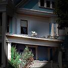 Neighborhood Watch Program by jpryce