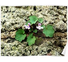 Small flower growing on the old rock wall Poster
