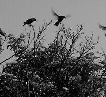 In Flight........Starlings by DoreenPhillips