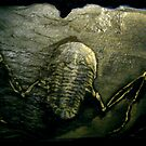 Mythical Flying Trilobite Fossil II by Glendon Mellow