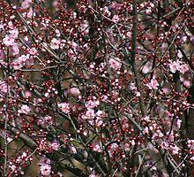 Blossom Bonanza by OzShell