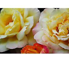 Peaches and Cream Photographic Print