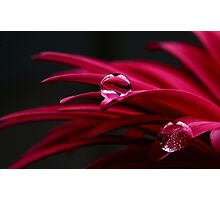 Jewels Photographic Print