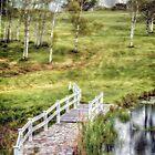 Birch Meadow by Richard Bean