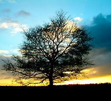 Tree of Life by newbeltane