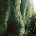 tree trunk by beebite