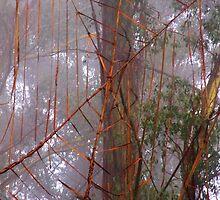 Spiderweb in the mist by Franksintown