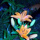 Lillies at Night by mwmclaren