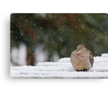 Cold Snooze Canvas Print