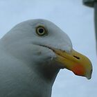 Hi Gull by Pastis