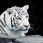 White Tiger by apriljd